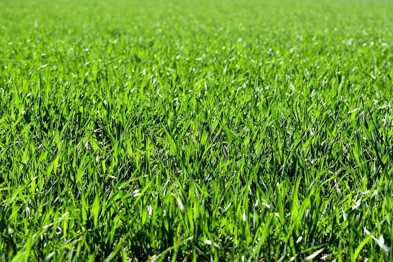 geen kale plekken met grasmaaier afstellen