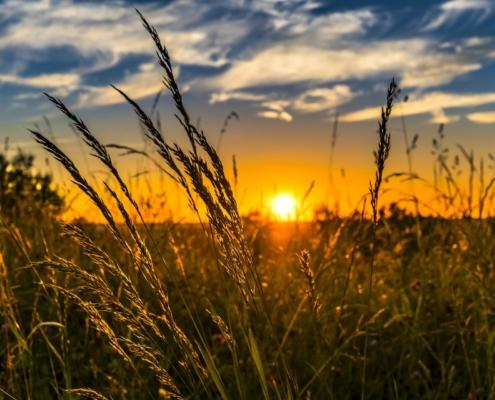 grasmaaien in de zon