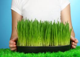 hoe snel groeit gras